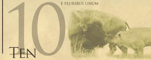 Buffalo_10_-_front
